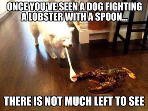 dogs dafuq lobsters animals - 8394907392