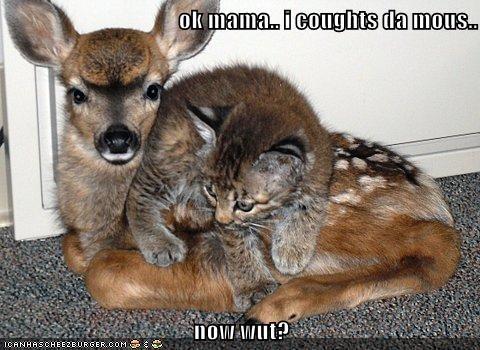 animals - 8394986496