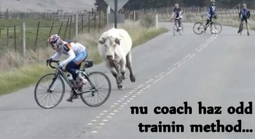 cow,trainer,chase,bike