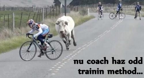 animals cow trainer chase bike - 8395341056