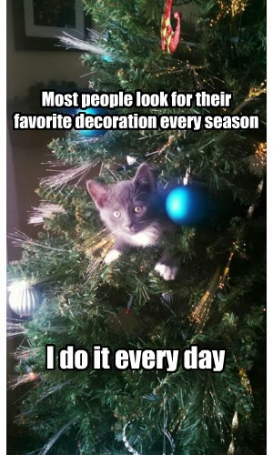 christmas,decoration,Cats