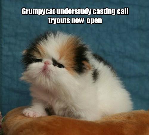 Grumpy Cat kitten Cats squee - 8395358720