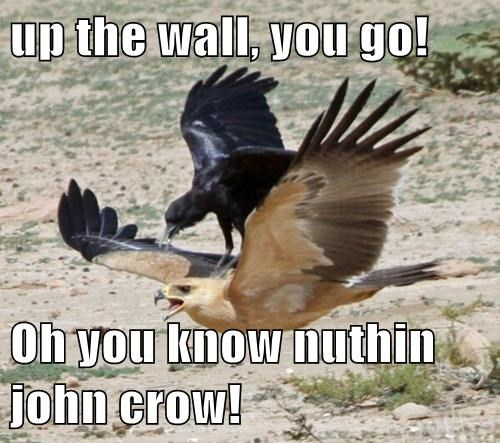 animals birds crow Game of Thrones hawk - 8395546880