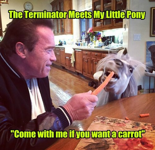 my little pony,carrot,arnold schwartzenegger