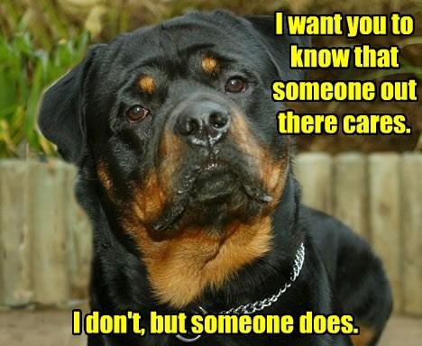 doberman pinscher i dont care dogs - 8395933440