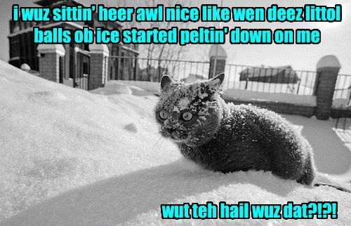 Cats,hail,cold,puns,winter