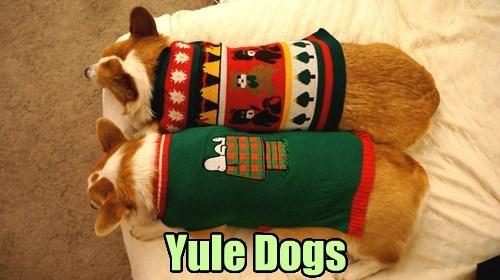 christmas dogs corgi - 8396080896