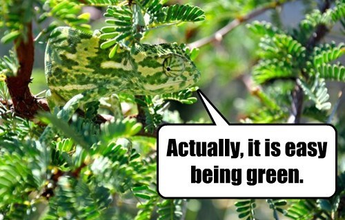 green kermit chameleon lizard