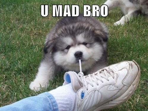 animals dogs u mad puppy shoe