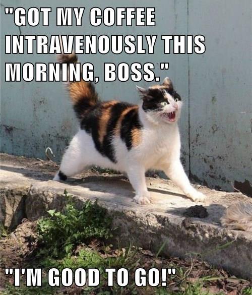 animals crazy coffee Cats monday - 8396528384
