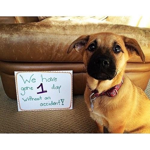 puppy accident dog shaming - 8396775680