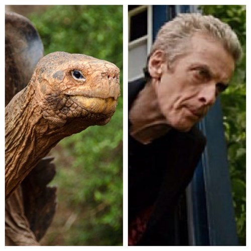 12th Doctor turtle - 8396787456