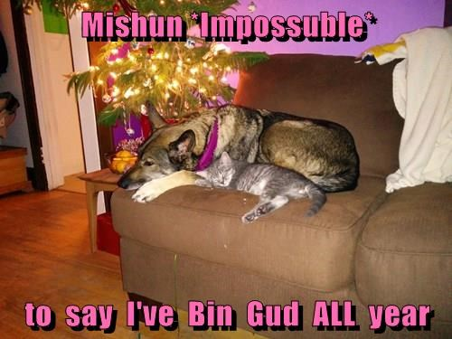 animals christmas dogs Cats - 8396789504