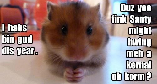 christmas corn hamster - 8396802560