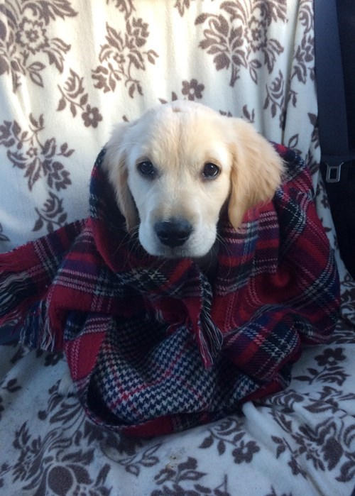 dogs puppy cute winter - 8396838912