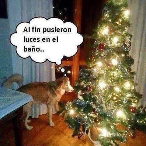 bromas perros Memes animales - 8396937472