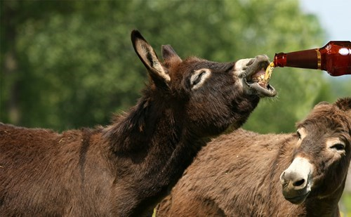 beer wtf donkey funny - 8396948480
