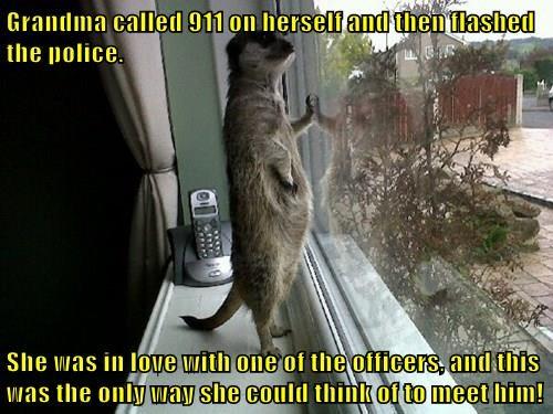 animals - 8397245952