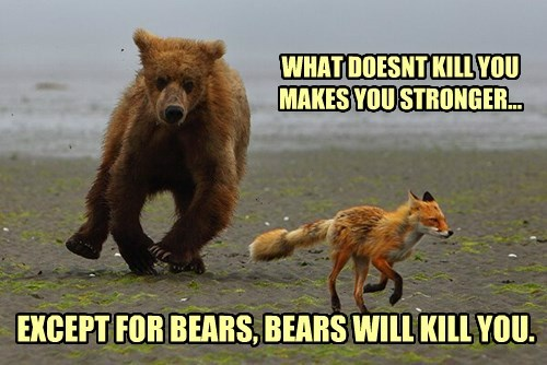 bears,fox,advice