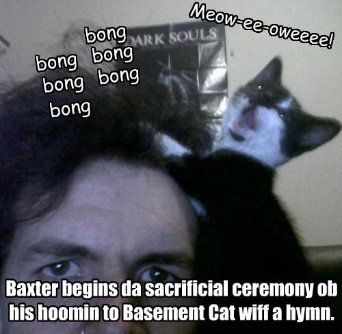 basement cat sacrifice Cats - 8397645312