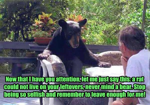 bears,garbage,attention