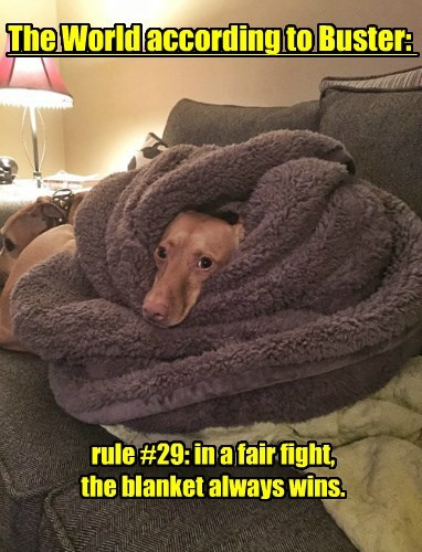 The World according to Buster: rule #29: in a fair fight, the blanket always wins.