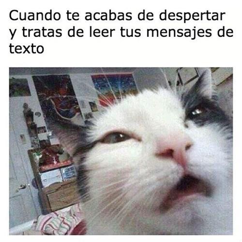 gatos bromas Memes animales - 8397665280