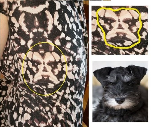 dogs,poorly dressed,pattern,totally looks like