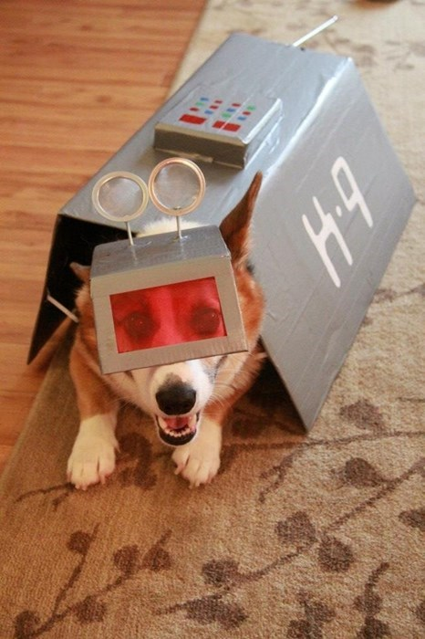 dogs cosplay corgi k9 - 8397743104