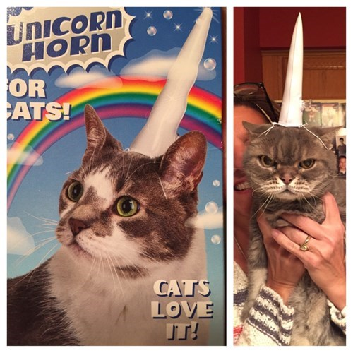 unicorn angry Cats - 8397836800