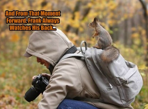 Not Even Once squirrel photographer - 8397939456