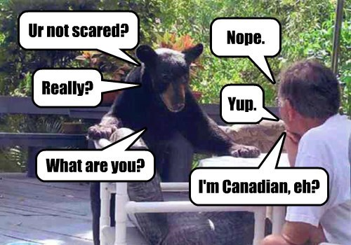 fearless Canada bear - 8398135808