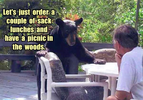 woods atmosphere bear lunch funny - 8398165504