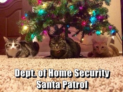 animals christmas santa Cats patrol - 8398233856