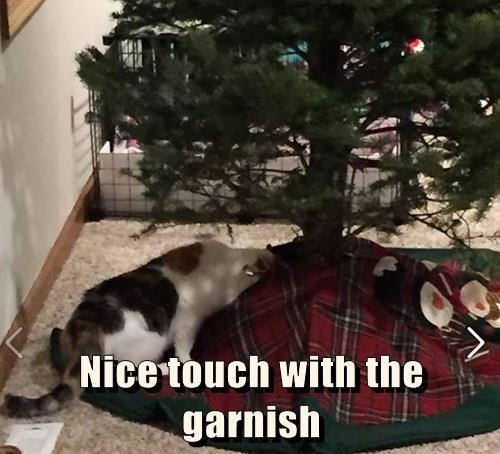 christmas,christmas tree,Cats