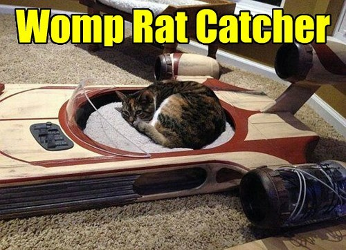 womp rat star wars Cats - 8398421760
