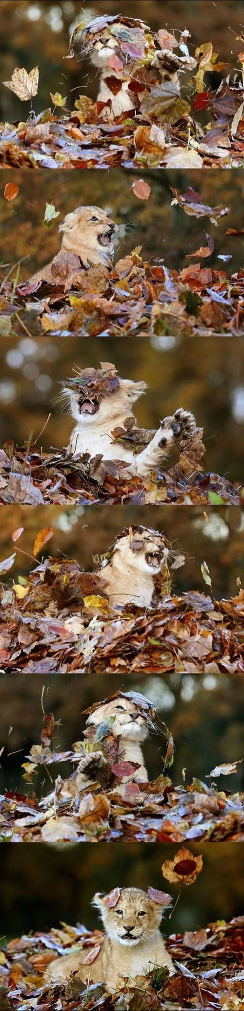 cub lion leaves Cats - 8398569728