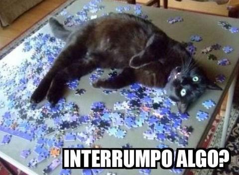 Memes animales gatos bromas - 8398715136