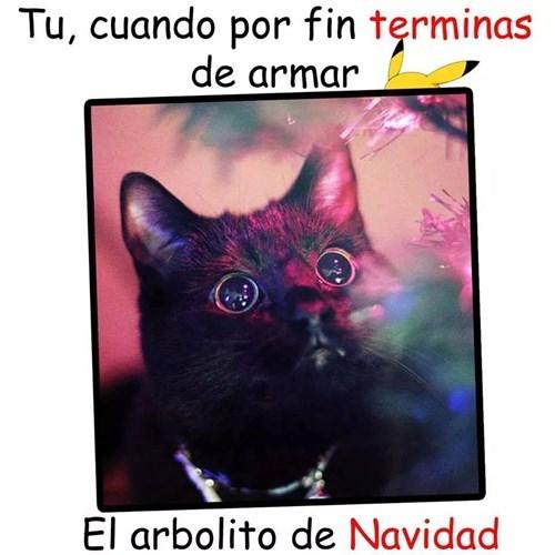 Memes bromas - 8398715648