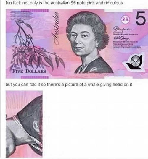 accidental sexy australia money failbook - 8398811392
