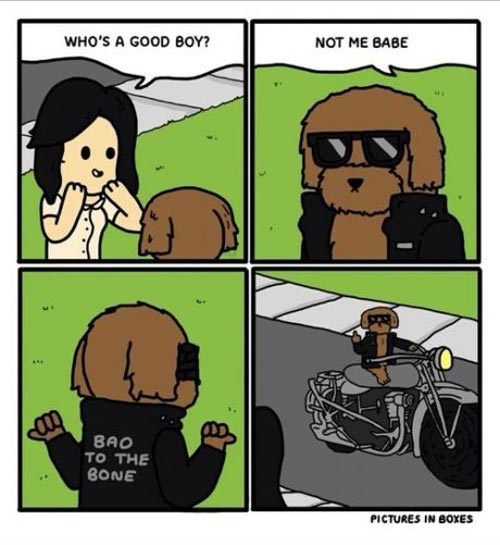 dogs pictures web comics - 8398813440