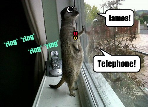 phone call meerkat sir butler - 8398859520
