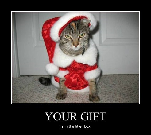 christmas present Cats - 8399268352