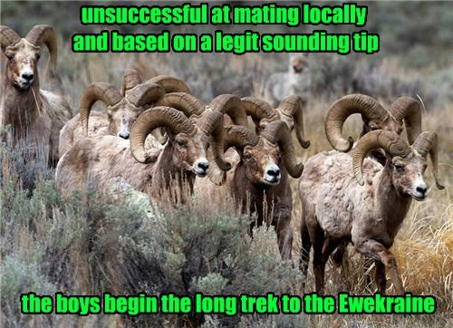 unsuccessful at mating locally and based on a legit sounding tip the boys begin the long trek to the Ewekraine