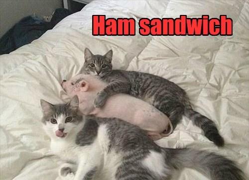 pig,sandwich,Cats