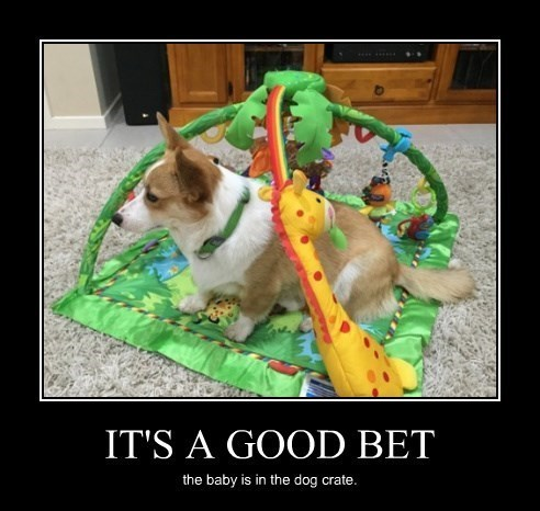 bet dogs crate funny - 8399426816