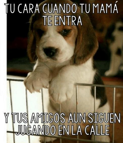 bromas perros Memes animales - 8399604480