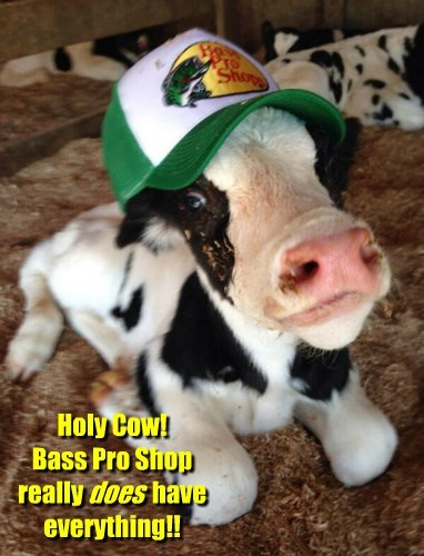 cow,everything,baseball hat,shopping,funny