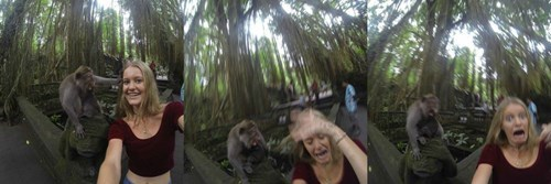 monkey selfie animals - 8399710208
