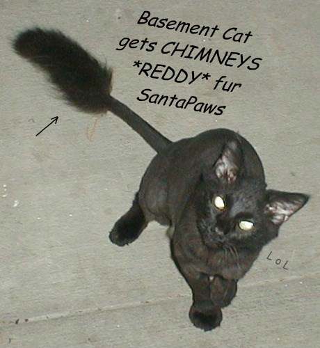 Cats black cat basement cat christmas santa clause - 8399755008